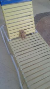 Here he is lounging by the pool.